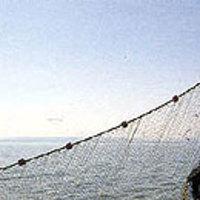 Műholdon figyelik az orvhalászokat