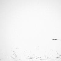 A dörzsölt rapsicok a jég alól is kilopják a halat