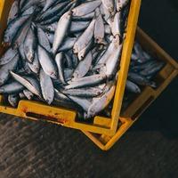 Nyolc orvhalász bukott le Tokajnál
