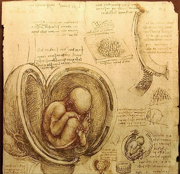 leonardo-da-vinci-pregnant.jpg