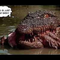 Tudományos percek: A krokodil