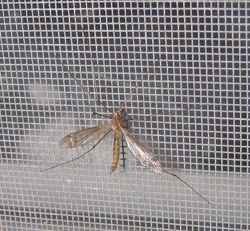 Szúnyogháló szúnyogok ellen