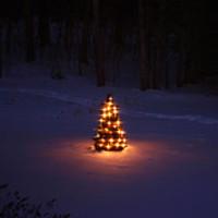 ötlet #33: fogadj örökbe egy Karácsonyfát