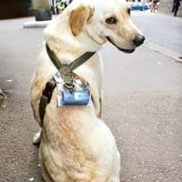 ötlet #17: kutyázás online
