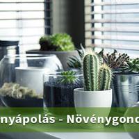 Az 5 legjobb irodai növény