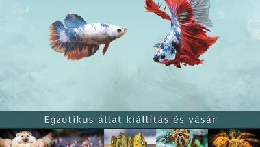 """Győri """"állatkert"""" május 15-én"""