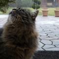 Picur cicánk és a költözés