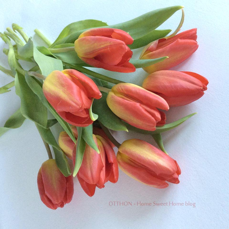 tulip_ohsh.jpg