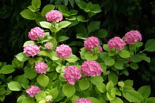 Karantén után – Muzsika a kertben