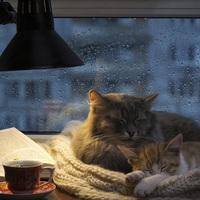 Válassz egy jó könyvet az esős napokra!