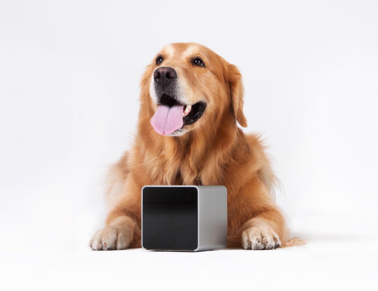 petcube-remote-wireless-pet-camera-03.jpg