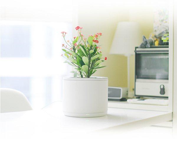 planty-02.jpg
