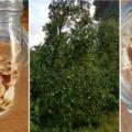 A legjobb almachips