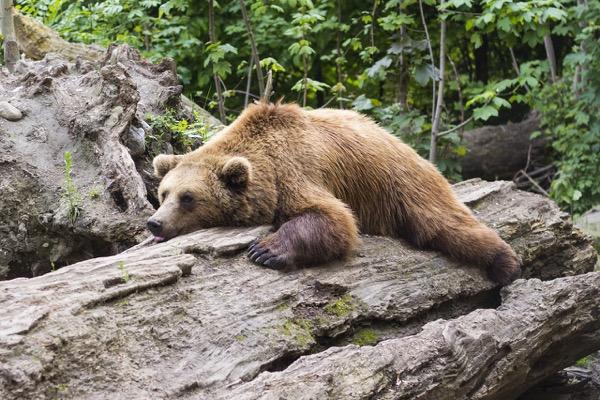 Így ne vonzd be a medvét az otthonodba!