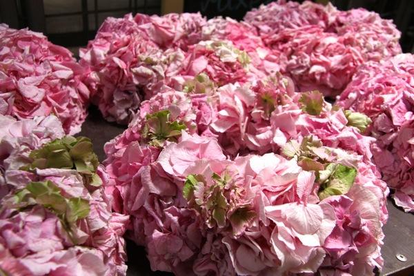 Virágpiac-Szigetszentmiklós_1.JPG