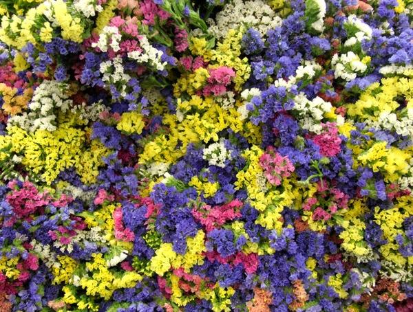 Virágpiac-Szigetszentmiklós_3.JPG