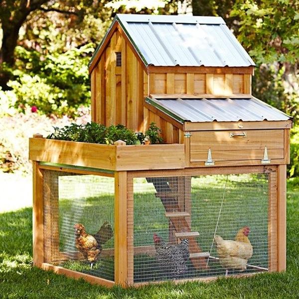 hen house4.jpg