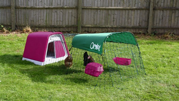 hen house5_1.jpg