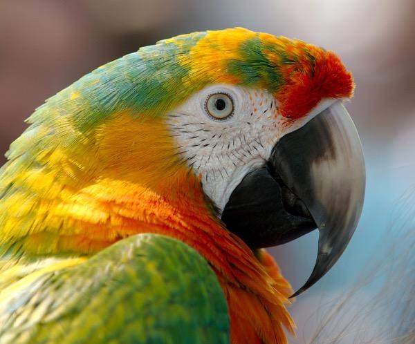 papagaj1.jpg
