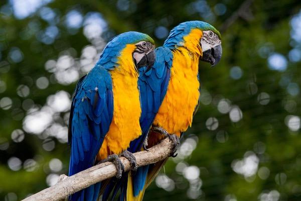 papagaj2.jpg