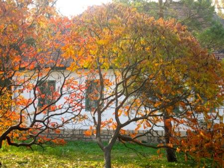 Egy őszi nap fotókrónikája