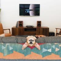 Ilyen, amikor egy szőrmók otthonként tekint a lakásodra! - Vigyázat, szupercuki képek!