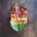 Elmúlás, bölcsesség, megújulás: az ősz szimbólumai