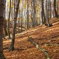 Küzdelmek a gyönyörű őszi erdőben - Évadzáró verseny tájfutóéknál