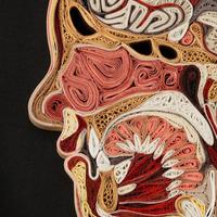 Emberi testmetszetek papírból - Lisa Nilsson