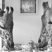 Reggeli a zsiráfokkal