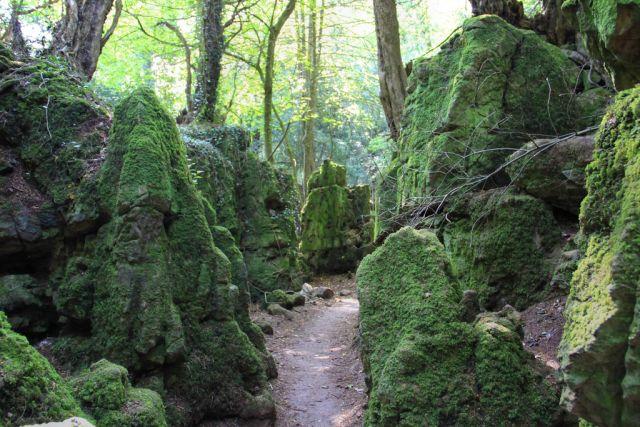 Puzzlewood sziklái