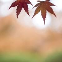 Őszi tarisznya:őszi versek és mondókák