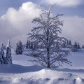 Decemberi tarisznya: Téli versek óvodásoknak