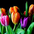 Kányádi Sándor: Néma tulipán