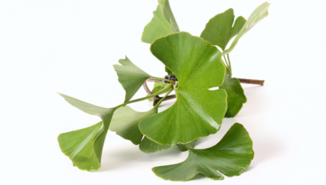 ginkgo25.png