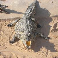 Tunéziai kaland, Djerba szigete