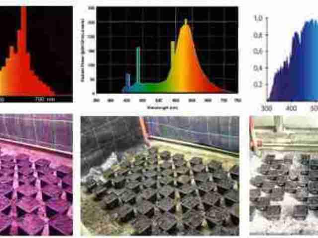 Növénynevelésre használható fényforrások összehasonlítása