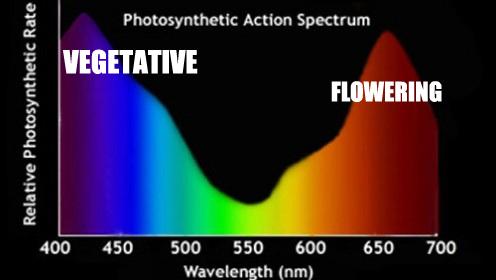 fotoszintezis_rata.jpg