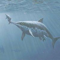 Kalmár volt a kis ichthyoszaurusz utolsó vacsorája