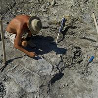Ragadozók falatoztak a magyar dinókból