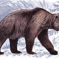 Újabb fejlemények láttak napvilágot a barlangi medvével kapcsolatban