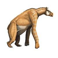Chalicotherium - A kigyúrt ló