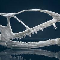 Egy oázisban élhetett a különleges korai pteroszaurusz