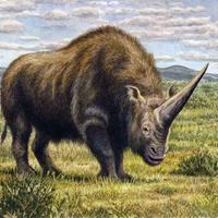 Elődeinkkel szívhatott egy levegőt az utolsó egytülkű rinocérosz