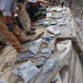 Több mint ötszáz ősféreg-kövületet találtak Kanadában