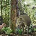Minilovak és óriástapírok a negyvenmillió éves üvegházból