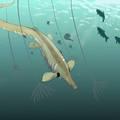 A kacsacsőrű emlősre hasonlíthatott a különös tengeri hüllő