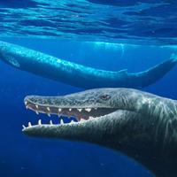 Bálnaborjakra fenhette fogát a hatalmas Basilosaurus