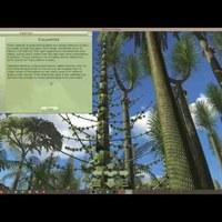 Karbon erdő szimulátor