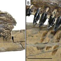 Ragadozó halak lakmározhattak a repülő őshüllőn
